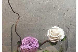 rosa-centenaria